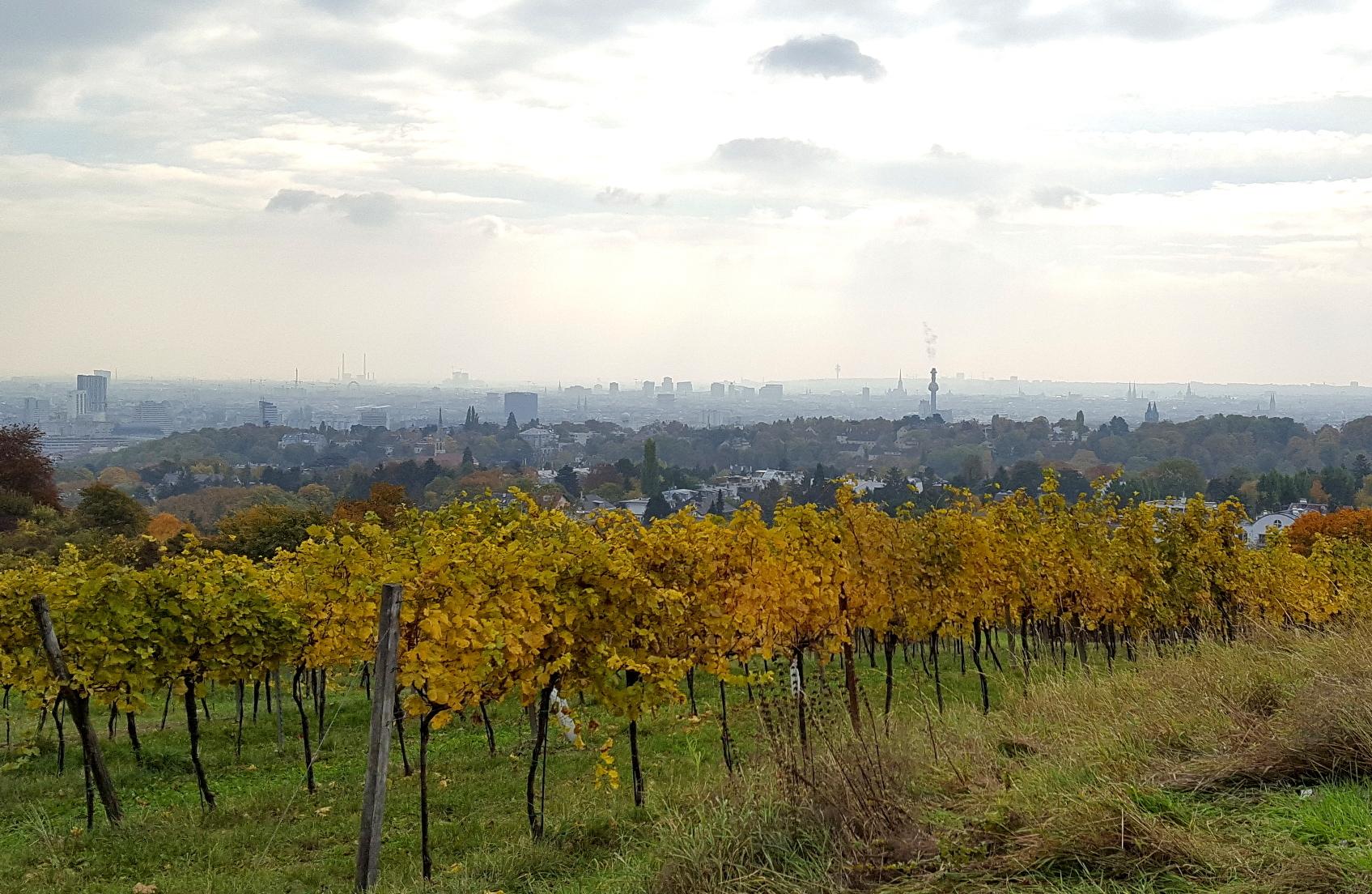 Vienna skyline and vineyards